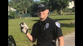 Florida Police Rescue Kitten From Patrol Car Engine