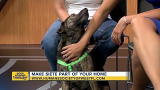 Rescues in Action: Siete - Video