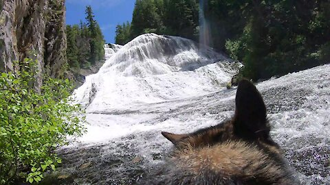 Dog explores massive waterfall while wearing GoPro