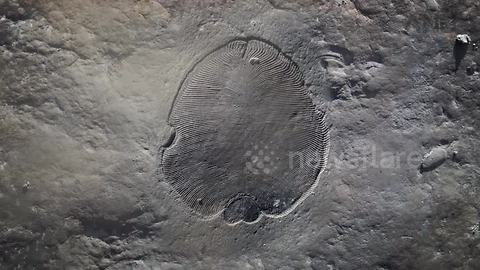558 million year old fossil unearthed in Russia