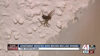 Brown recluse spiders invade Northland apartment, tenant wants to move out