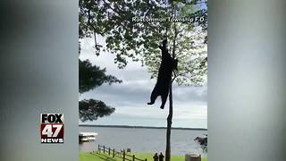 Bear rescue from tree