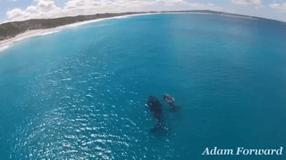 Drone Video Captures Mother Whale, Calf Cruising W. Australia Coast - Video