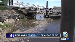 State says blue green algae in Lake Okeechobee is not toxic - Video