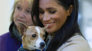 Meghan Markle Has Been Secretly Helping Her Charities During COVID