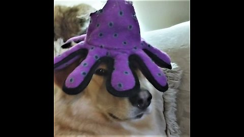 Family dog is seriously unimpressed with new head gear