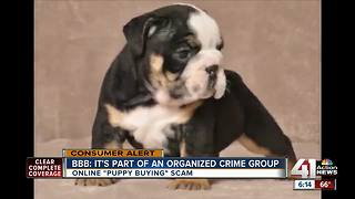 What to look out for when buying a puppy online - Video