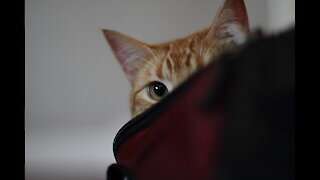 """Owner tries to play peek-a-boo with his cat, gets """"viciously"""" attacked"""