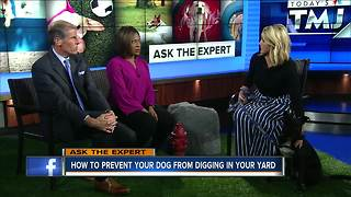 Ask the Expert: Preventing dog digging