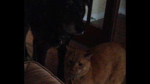 Cat keeps giving dog hugs