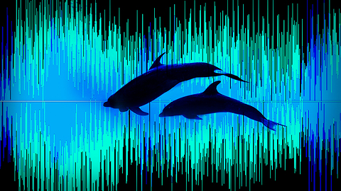 Artificial Intelligence Is Mapping the Pacific Ocean's Secret Soundscape   The Swim