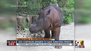 Cincinnati Zoo hopes it can save these special rhinos - Video