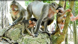 Generous People Give Water To Monkey Drink