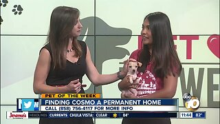 Pet of the Week: Cosmo