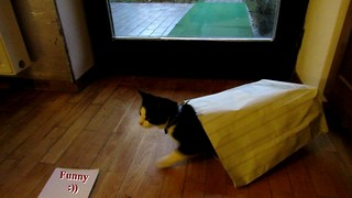 Cat's first paper bag experience ends in disaster - Video