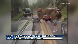 Yellowstone National Park visitor taunts bison on street during traffic - Video