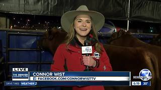 National Western Stock Show preparations - Video