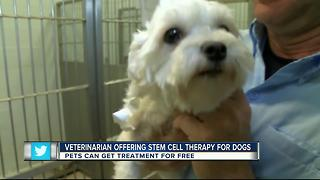 Veterinarian offering stem cell therapy for dogs - Video