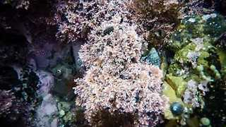 Underwater Timelapse Shows Aquatic Life Near Wellington - Video