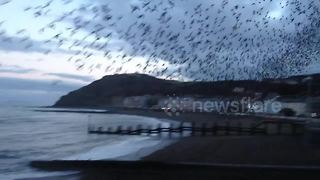 Starling murmuration swirling above Aberystwyth's Royal Pier - Video
