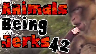 Animals Being Jerks #42 - Video