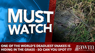 One of the world's deadliest snakes is hiding in the grass - so can YOU spot it?