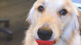 Puppy puckered up looking for love (sound on!)  - Video