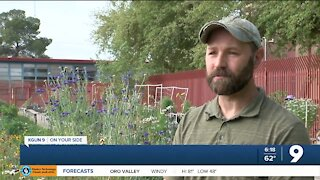 Growing interest in Tucson community gardens