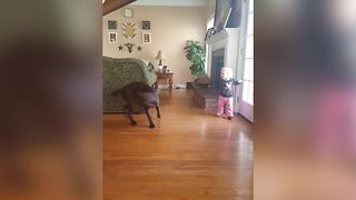 A Dog Chases Its Tail And A Tot Girl Spins Around In Circles - Video