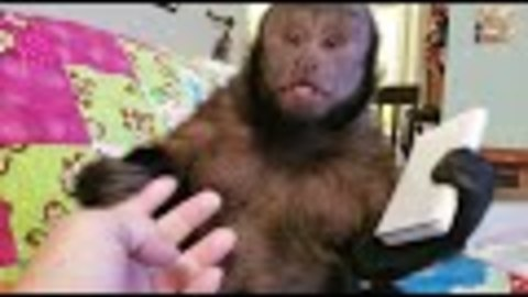 Monkey Working With Calculator Sees a Ghost