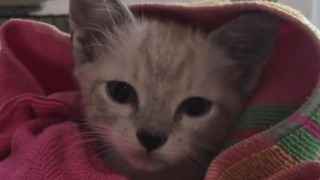 Born paralyzed, this cat lives life to the fullest - Video