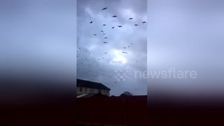 Huge flock moves inland as Ophelia hits Ireland - Video