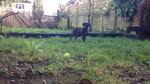 """Puppy instinctively """"points"""" for the first time"""