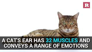 Fun facts about cats | Rare Animals - Video