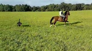 Watch: 'Out-of-control' rottweiler hounds horse riders in terrifying three-minute chase - Video