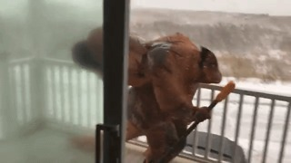 This T-Rex Struggling to Shovel Snow in Blizzard Is the Funniest Thing You'll See Today - Video