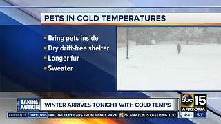 Keeping your pets warm as temperatures drop - Video