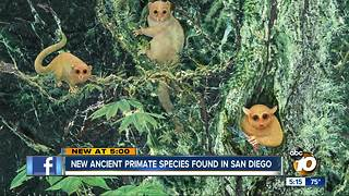 New ancient primate species found in San Diego