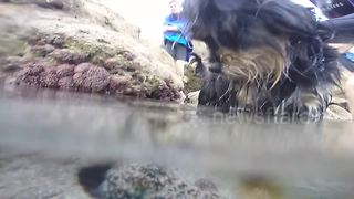 Octopus grabs dog in Porto Santo - Video