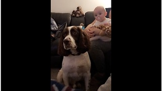 Baby And Dog Look Fixedly At Potential Treat - Video