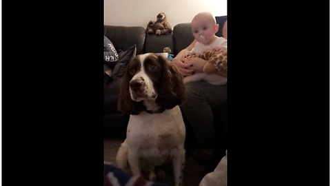 Baby And Dog Look Fixedly At Potential Treat