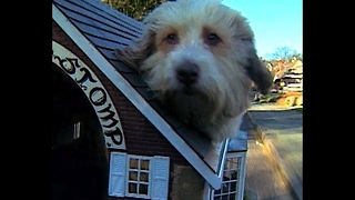 Kennel Motorcycle - Video