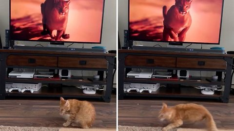 Cat Freaks Out When Puma Appears On TV