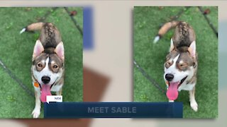 Cleveland APL pet of the weekend: Sable