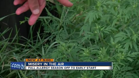 High levels of ragweed and mold setting off allergies early