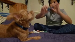 Dog Wants to Sing Along with Recorder