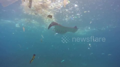 Plastic pollution ruins tourist's diving trip in Indonesia