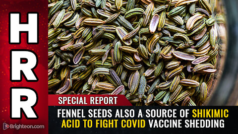 Special Report: FENNEL SEEDS also a source of shikimic acid to fight covid vaccine shedding