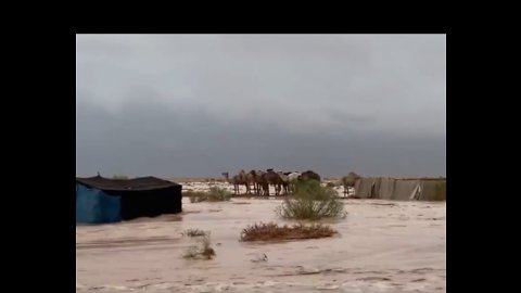 Camels Huddle as Deadly Floodwaters Sweep Across Eastern Saudi Arabia
