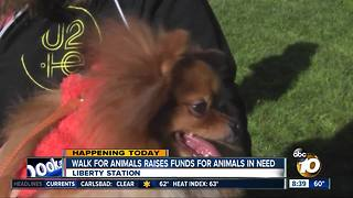 Thousands walk for animals at Liberty Station - Video
